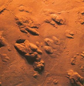Upper Triassic dinosaur tracks found in Nova Scotia