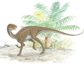 Heterdontosaurus tucki