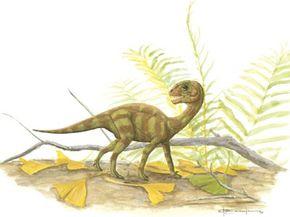 Mussaurus patagonicus juvenile