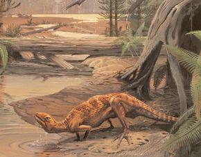 An Early Jurassic Scutellosaurus