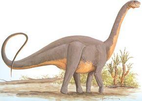 Datousaurus bashanensis