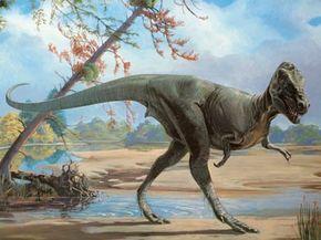 The tyrannosaur Daspletosaurus. See more dinosaur images.