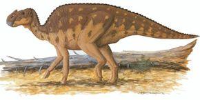 Aralosaurus tuberiferus