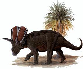Arrhinoceratops brachyops