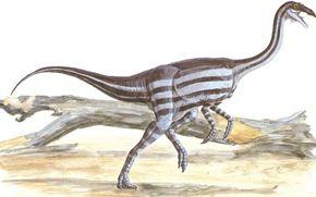 Gallimimus bullatus See more dinosaur images.