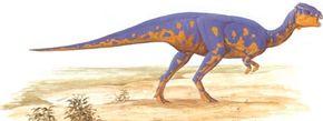 Goyocephale lattimorei See more dinosaur images.