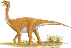 Opisthocoeliscaudia skarzynskii. See more dinosaur images.
