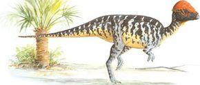Prenocephale prenes. See more dinosaur images.