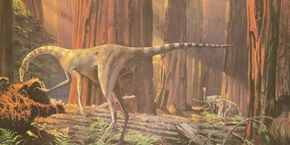 A few ostrich dinosaurs, named Dromiceiomimus, search for food in a Late Cretaceous forest. See more dinosaur images.