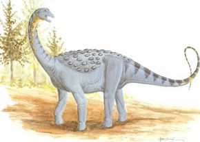 Saltasaurus loricatus. See more dinosaur images.