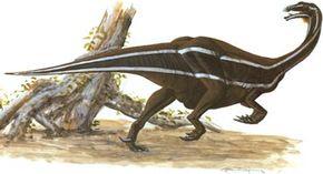 Segnosaurus galbinensis. See more dinosaur images.