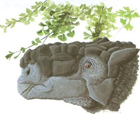 Tarchia. See more dinosaur images.