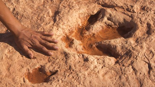 Our World Is Rich With Places to See Real Dinosaur Tracks