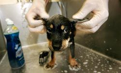 If you have pet allergies, be sure to wash your pet frequently.
