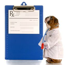 Keep a two- or three-week supply of your pet's meds on hand at all times.