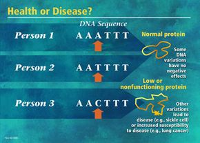 Variations in the sequence of genes during can have important consequences and cause disease.