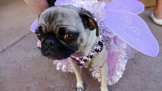 Do Dogs Get Embarrassed When We Dress Them Up?