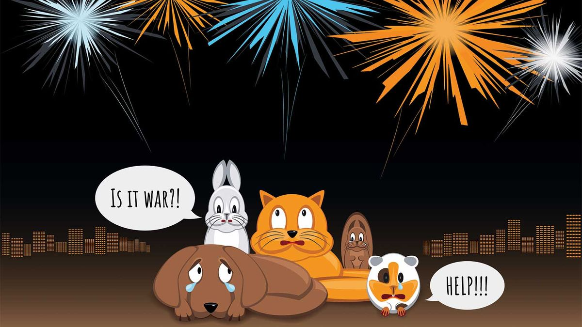 How to Comfort Your Dog During Fireworks