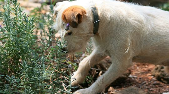 How to Make Homemade Dog Repellent