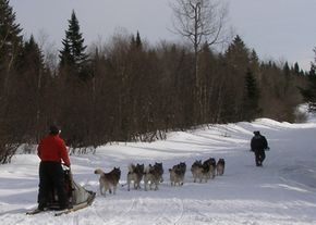 Dogs pulling a sled in New Hampshire