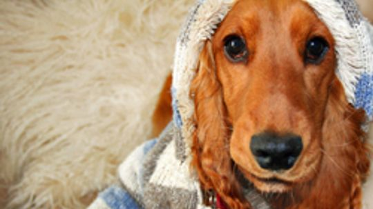 How to Choose Dog Travel Clothing