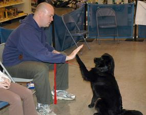 """This dog has learned the hand signal for """"high five."""""""