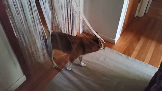 Dog Trancing: You're Gonna Need to See This Video
