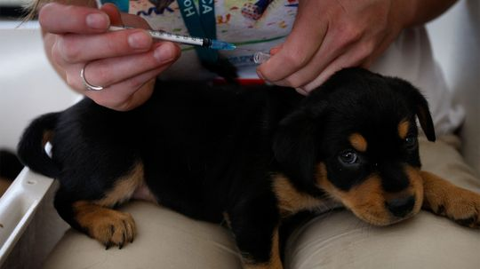 Too Many Shots? Inside the Dog Vaccination Controversy