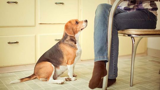 No Chocolate, No Avocado: 10 Foods Dogs Can't Eat