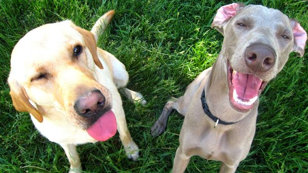 Dogs Make More Expressive Faces When Humans Are Watching