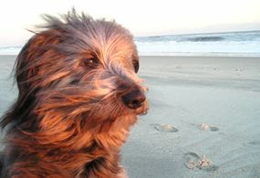 Jenkins contemplates life as a dog.