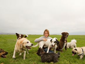 At dog parks, canines make friends and run free. Check out these dog pictures.