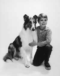 Baby, who played the part of canine hero Lassie in the TV show and actor Jon Provost in a promotional photo from 1959. See more dog pictures.