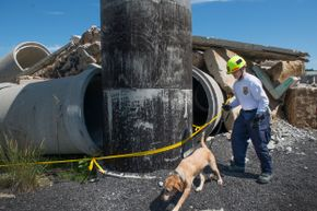 Search and rescue team Ron Sanders and canine Pryce prep for a training run in Lorton, Virginia.