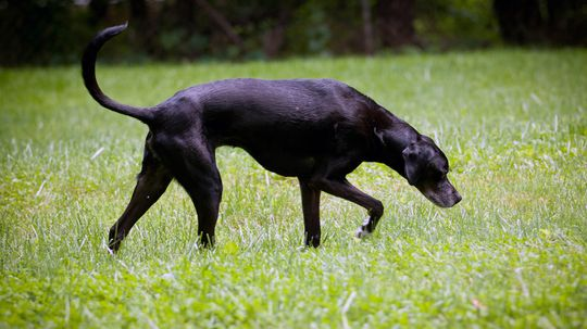 Can Dogs Lose Their Ability to Smell?