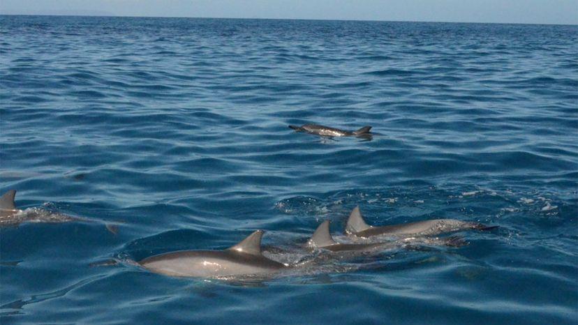 dolphins, sleep
