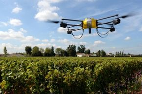 Drones are used in agriculture all the time. This drone is sweeping a winery's grapes so the winemaker can assess the maturity of the fruit.