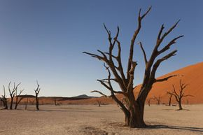 Namibia's Deadvlei was once a place of life.