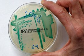 Methicillin-resistant Staphylococcus aureus is one of the more notorious strains of drug-resistant bacteria.