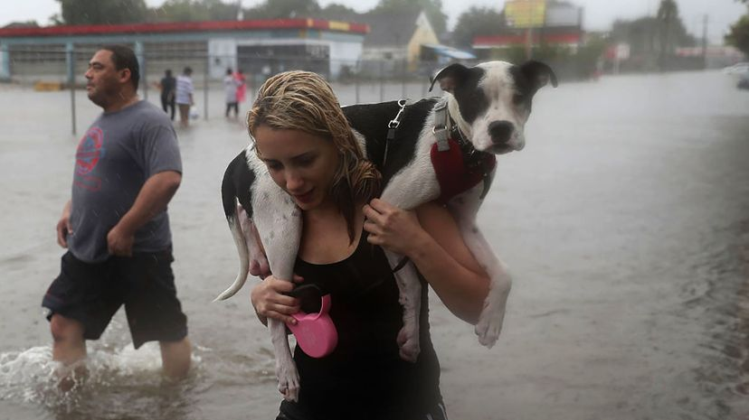 Naomi Coto carries her dog Simba on her shoulders as they evacuate their Houston, Texas home on Aug. 27, 2017, following flooding caused by Hurricane Harvey. Joe Raedle/Getty Images