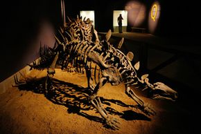 China has provided a large number of fossils to the fossil record -- the natural history of Earth captured by all of the fossilized remains discovered to this point. This skeleton was displayed in Shanghai in July 2007.
