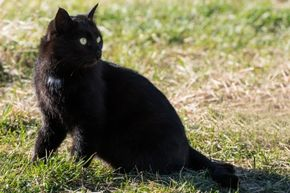 Superstitious thinking, like believing crossing paths with a black cat is unlucky, is the result of falsely linking a cause to an effect.