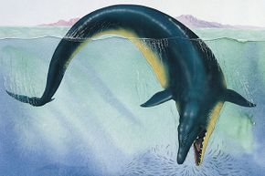 """This giant creature, originally called """"king lizard,"""" lived 40 million years ago."""