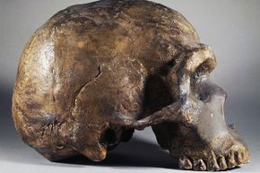 Questions remain about modern humans' relationship with co-existing Neanderthals.