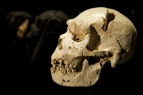 This hominid is likely our first cold-climate-dwelling ancestor.