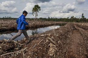 Deforestation in places like Indonesia, pictured here, can cause extinction and a ripple of negative effects in the biological community.