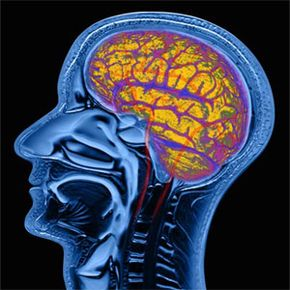 Is there a part of that magnificent organ devoted to ESP? See more brain pictures.