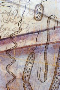 These artist's depictions of single-celled organisms fall in the Monera kingdom, home of prokaryotes.