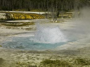That boiling geyser at Yellowstone National Park probably has some extremophiles lurking nearby.