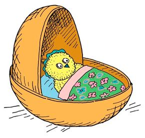 Make a little cradle for a sleeping baby chick!